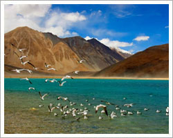 Nubra Valley Travel Guide for Pangong Tso Lake in Ladakh
